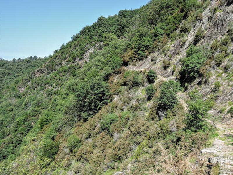Itinerari - Anello 6 Sentieri di Pace: Focetta - Argentiera di sopra - Torre dell'Argentiera - Moriconi - Colle Zuffoni - Monte Rocca - Monte Marina - Focetta