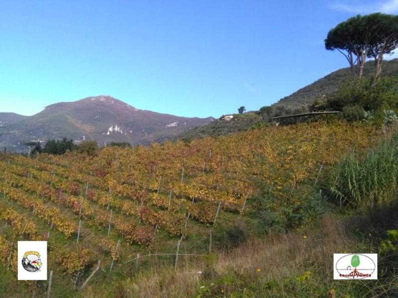 Eventi - Tramonti e calici: nelle vigne della biodiversità