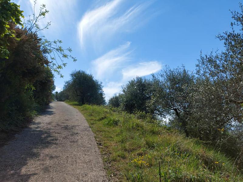 Sentieri - La Panoramica di Massarosa , dove ammirare tutta la Versilia immersi nella natura
